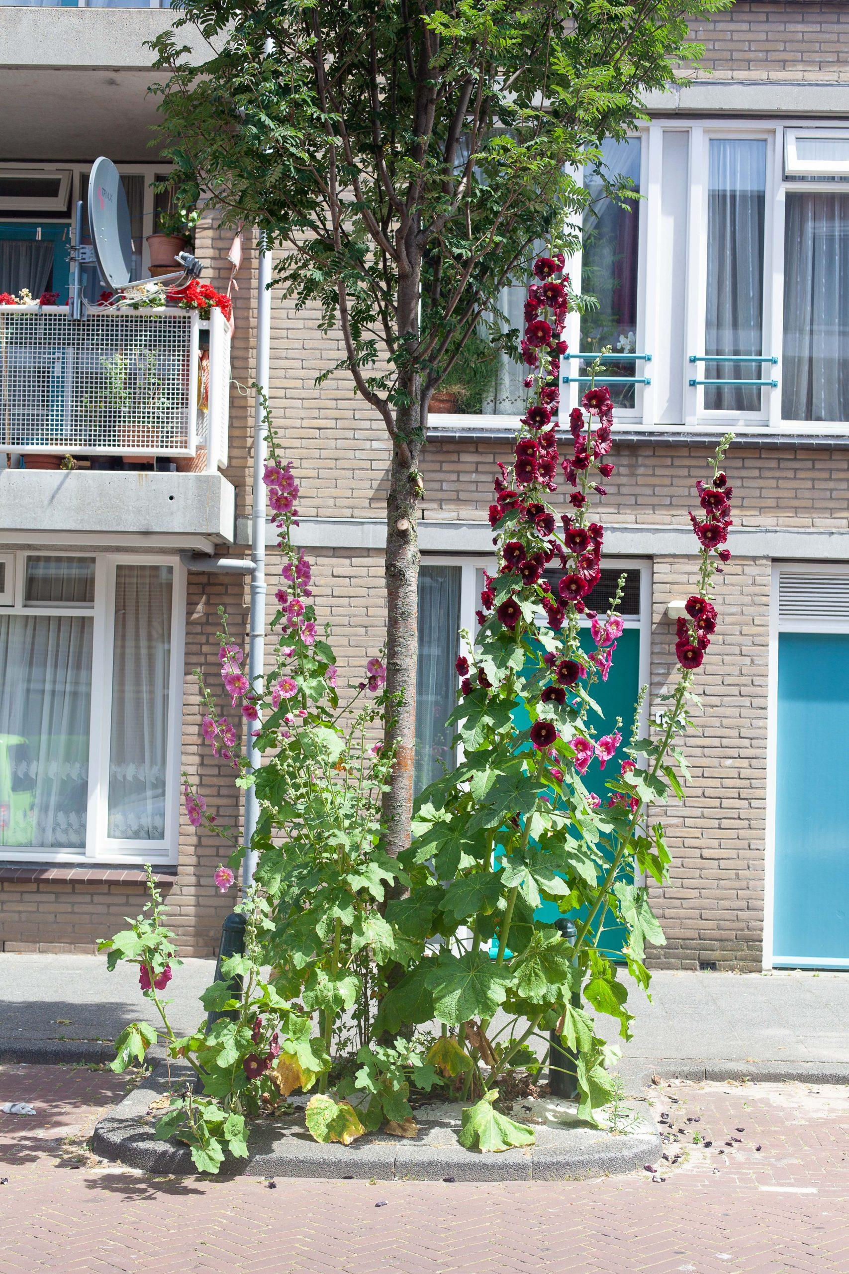Den Haag Community Builders (350 of 401)